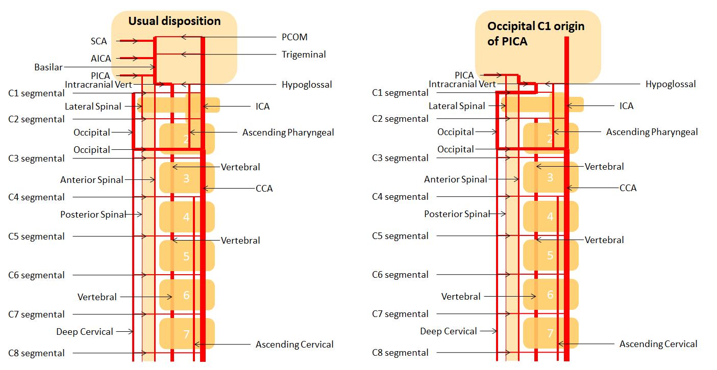 Occipital Artery