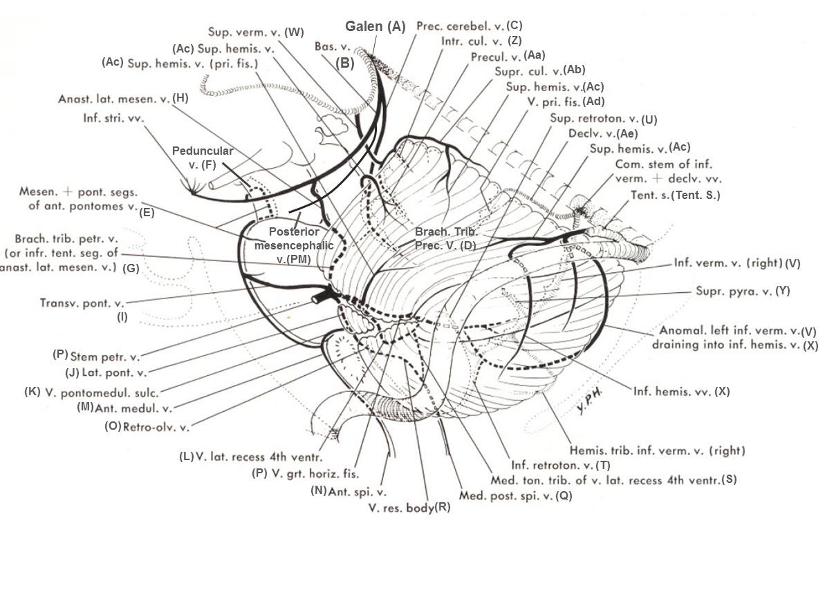 V_posterior_fossa_diagram_1.png