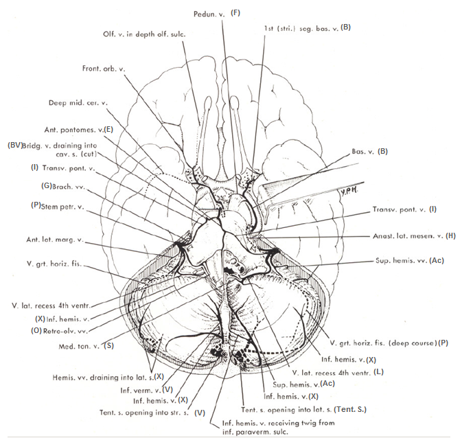 http://neuroangio.org/wp-content/uploads/Venous/Posterior_Fossa_Veins/V_posterior_fossa_diagram_3.png